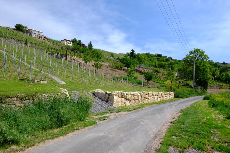 Weinberge zwischen Seeburg und Rollsdorf