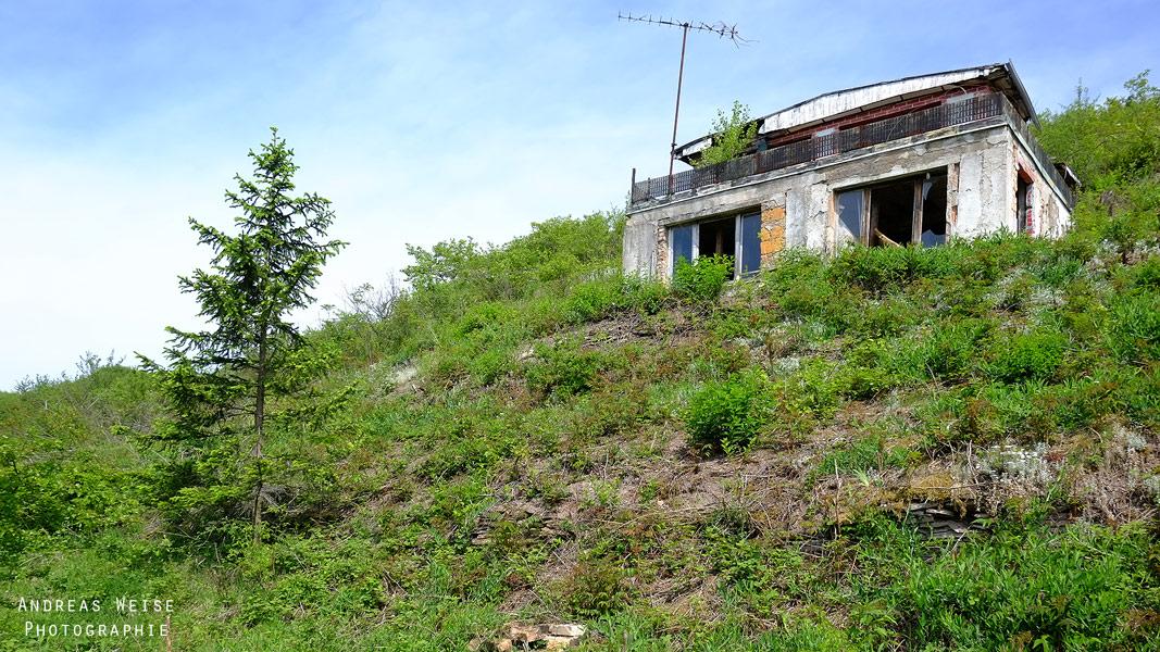 verlassener Weinberg