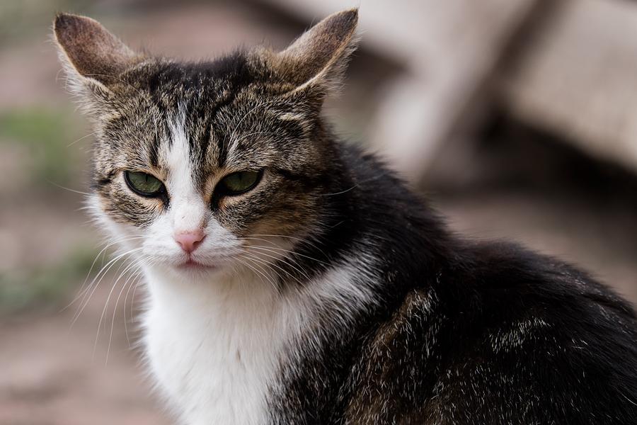 Katze Gut Seeben