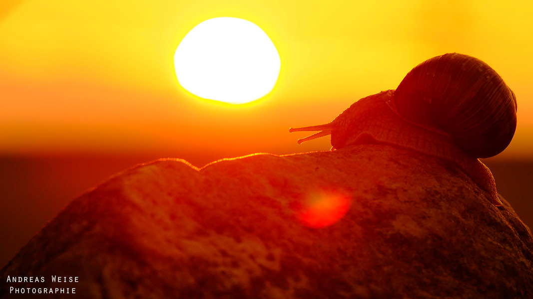 Schnecke beobachtet Sonnenuntergang