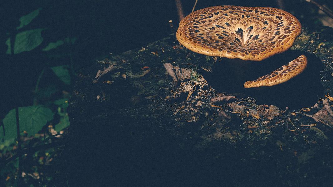 erste Pilze