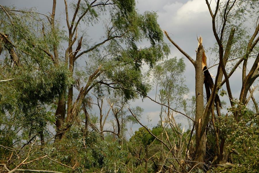 Sturmschäden an der Götsche