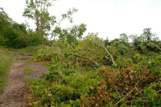 Sturmschaden an der Saale